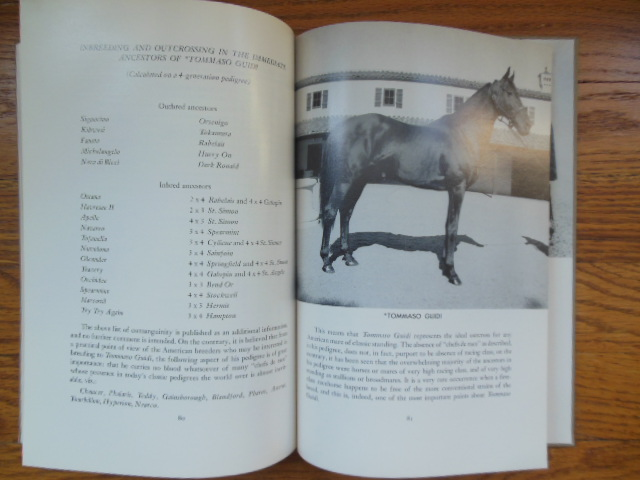 Image for Tomasso Guidi; A High Level Synthesis of Italian Racing and Breeding