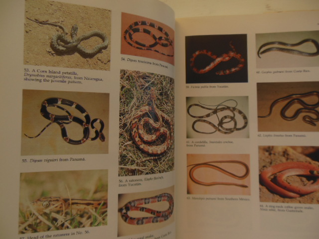 Image for Middle American Herpetology: A Bibliographic Checklist