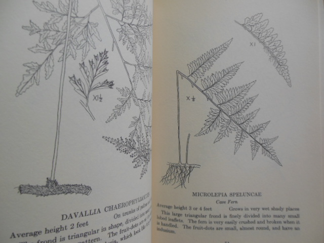 Image for Handbook of Liberian Ferns