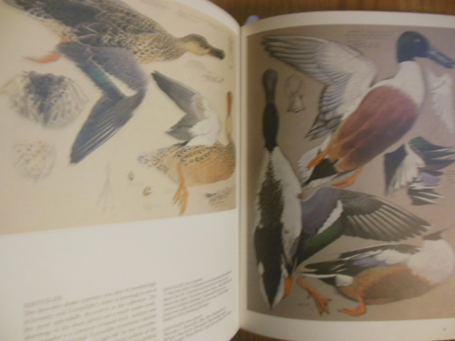 Image for Tunnicliffe's Birds: Measured Drawings by C.F. Tunnicliffe
